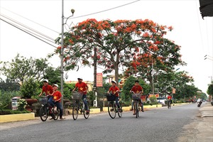 Ngắm hoa phượng vĩ đỏ rực Thành Nam