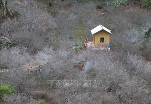Lạc bước trong rừng hoa trên cao nguyên Mộc Châu