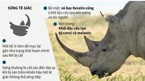 3/5 loài tê giác bị đe dọa tuyệt chủng ở mức cực kỳ nguy cấp