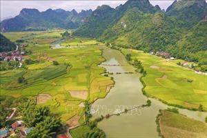 Mùa lúa chín tuyệt đẹp ở Trùng Khánh, Cao Bằng
