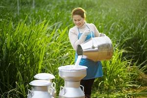 Sữa tươi chuẩn Hà Lan: Tự nhiên từ gốc, thuần khiết đến ngọn