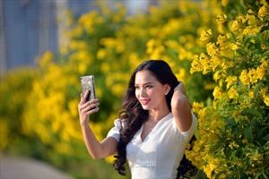 Hoa quỳnh liên nở vàng rực trên phố, thu hút giới trẻ đến chụp ảnh