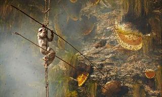 Treo mình trên vách núi cheo leo lấy mật ong