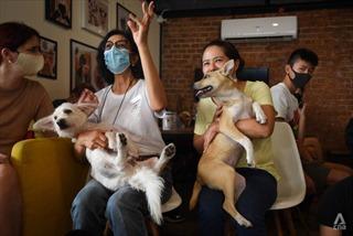 Quán cà phê thú cưng tại Thái Lan