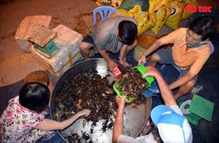 Chợ cua gần nửa thế kỷ ở TP Hồ Chí Minh ngày họp 3 tiếng, tan trước hừng đông