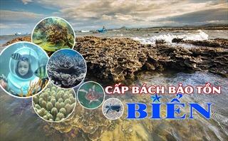 Cấp bách bảo tồn biển