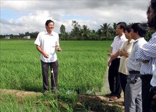 Gạo ST25 của Sóc Trăng được công nhận là gạo ngon nhất thế giới năm 2019