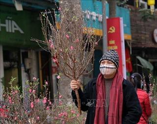 Chợ hoa 500 năm tuổi những ngày giáp Tết Tân Sửu