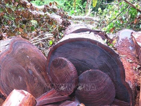 Rừng đặc dụng Phong Quang, Hà Giang vẫn bị 'xẻ thịt'