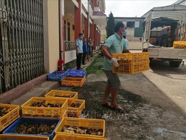 Thu giữ 4 xe tải chở 14.520 con gà giống nhập lậu