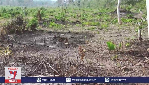 Tạm giam đối tượng phá rừng trên đảo Phú Quốc