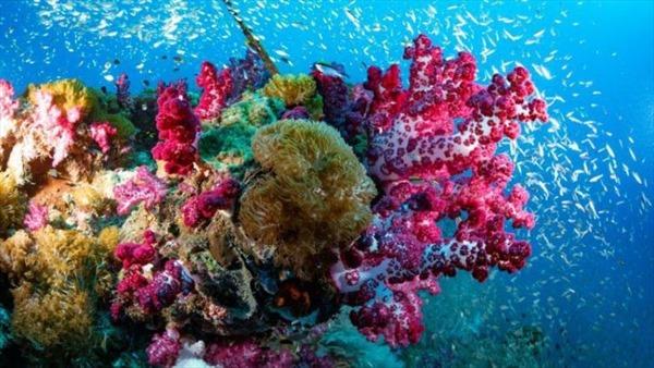 Phát hiện san hô khổng lồ ở Australia