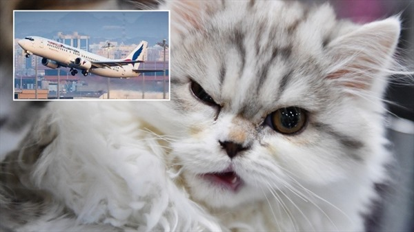 Bị mèo dữ tấn công, phi công buộc phải hạ cánh khẩn cấp