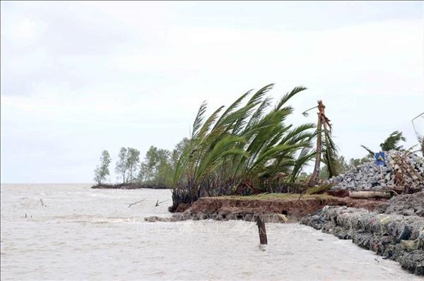 Đê biển Tây Cà Mau xuất hiện nhiều điểm sạt lở nghiêm trọng