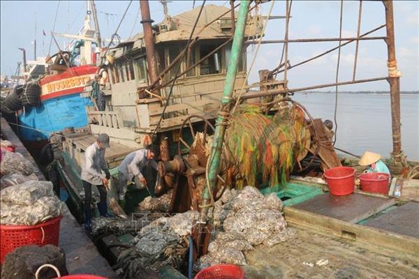 Nỗ lực gỡ 'thẻ vàng' xuất khẩu thủy sản