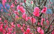 Gặp mặt thân mật vui Tết cổ truyền chào đón Xuân Kỷ Hợi tại Mỹ