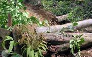 Bảo vệ và khai thác rừng bền vững