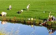 Kinh nghiệm giảm nghèo bền vững ở Bạc Liêu