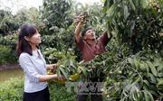 Tăng cường hợp tác quốc tế để phát triển đồng bằng sông Cửu Long