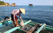 Kiên Giang: Khuyến cáo ngư dân cảnh giác với 'sinh vật lạ' gây hại cá nuôi lồng bè