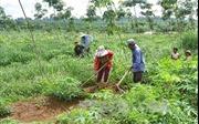 Giải quyết đất sản xuất cho đồng bào dân tộc thiểu số nghèo