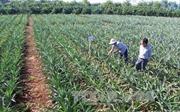 Giải pháp phát triển nông nghiệp bền vững tại Gia Lai