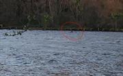 Quái vật hồ Loch Ness tái xuất sau 8 tháng biệt tích?