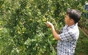Cơ hội cho cây ăn quả ôn đới ở Tây Bắc