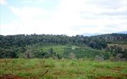 Thực hiện đồng bộ các giải pháp sắp xếp công ty nông, lâm nghiệp