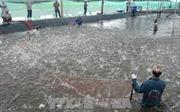 Cà Mau kiên quyết xử lý các trường hợp nuôi tôm ngoài vùng quy hoạch