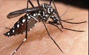 Rất dễ mắc bệnh sốt vàng nếu đến vùng có dịch