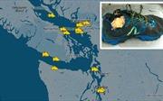 Giải mã bí ẩn 14 chiếc chân người trôi dạt vào bờ biển Canada