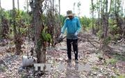 Cục Trồng trọt phản hồi không có việc nông dân phá tiêu còn tốt để bán rễ
