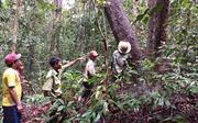Quỹ dịch vụ môi trường rừng  góp phần bảo vệ rừng tốt hơn