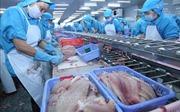 FSIS đề xuất công nhận hệ thống kiểm soát cá tra của Việt Nam tương đương Mỹ