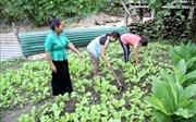 Xây dựng Đảng, chính quyền ở vùng đồng bào dân tộc Mảng - Bài 3: Ổn canh, ổn cư để xóa đói giảm nghèo