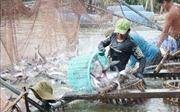 Quy định ba đối tượng thủy sản nuôi chủ lực