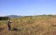 Dự án chuyển đổi rừng trồng cao su 'phá sản', doanh nghiệp Gia Lai 'xé rào' trồng mít, xoài