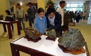 Giới thiệu bộ sưu tập đá cảnh thiên nhiên Suiseki độc đáo