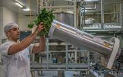 Australia biến 'rác' súp lơ và bông cải xanh thành thảo dược