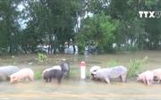 Nước lũ trắng trời vùng Đông Quảng Nam
