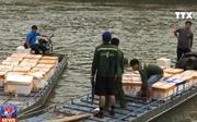 Bắt giữ trên 1 tấn cá đối đông lạnh nhập lậu từ Trung Quốc