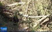 Bắt quả tang 3 đối tượng phá rừng ở Đà Lạt