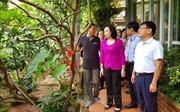 Hà Nội chuyển đổi cơ cấu theo hướng nông nghiệp công nghệ cao
