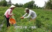 Nhân rộng mô hình Tổ tự quản giảm nghèo trong đồng bào Khmer