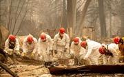 Thêm nhiều người chết và mất tích trong thảm họa cháy rừng ở Mỹ