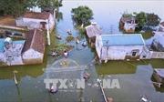 Hà Nội đưa các công trình xử lý cấp bách sự cố đê điều vào sử dụng trước mùa mưa bão