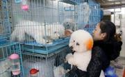 Bùng nổ thị trường dịch vụ thú cưng xa xỉ tại Trung Quốc