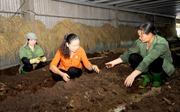 Nữ giám đốc với khát vọng thúc đẩy sản xuất nông nghiệp sạch