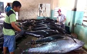 Mở thị trường xuất khẩu thủy sản - Bài 2: Thách thức không nhỏ